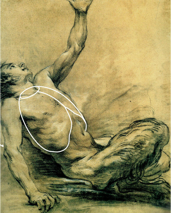 "The structure of the body is densely packed, without any ""empty space"". In this drawing by Boucher, the rib cage fills the space of the upper torso."
