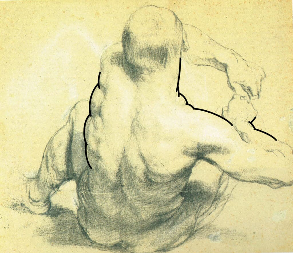 In this drawing by Van Dyck, we can clearly see the contour articulated as a series of full, outwardly-curved convexities.