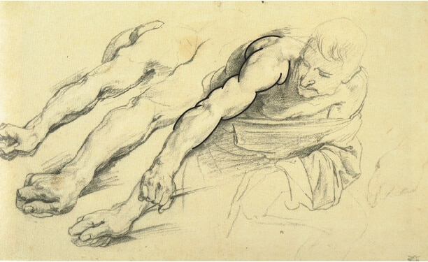 In this drawing by Van Dyck, clear overlaps can be seen of one muscle form over another, over another.