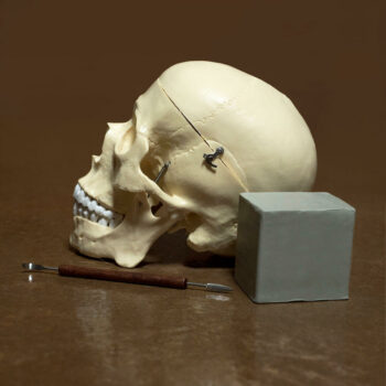 The required materials for Anatomy of the Face are simple: a skull, a clay tool, and half a block of clay.